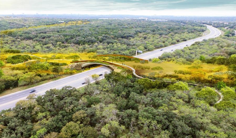 W San Antonio wybudowano największe w USA przejście dla zwierząt