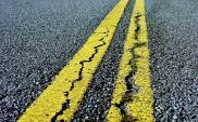 Droga w Katowicach zdewastuje lokalną przyrodę? Rusza przetarg