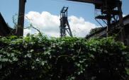 10 wstępnych ofert na zakup ZEC Katowice
