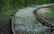 Korytarze ekologiczne i ich przebieg w Polsce