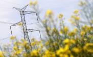 PSE: Jest przetarg na budowę stacji 220/110 kV Praga