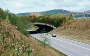 Infrastruktura drogowa dla dzikich zwierząt – z czyjej kieszeni?
