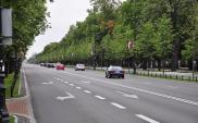 Miasta bez drzew. Ulice jak patelnie