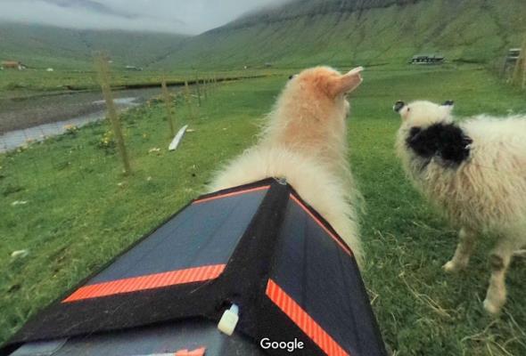 Sheep View zamiast Google Street View. Czyli z kamerą przez Wyspy Owcze
