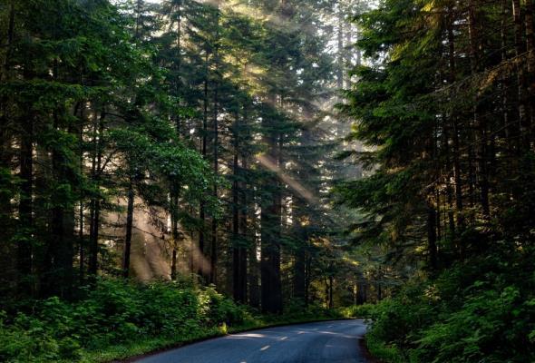 Znikną Regionalne Dyrekcje Ochrony Środowiska. Ma być jedna DOŚ i oddziały