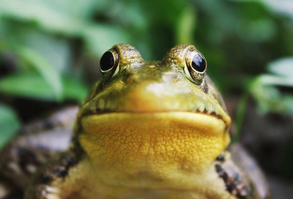 Kujawsko-pomorscy drogowcy zadbają o żaby