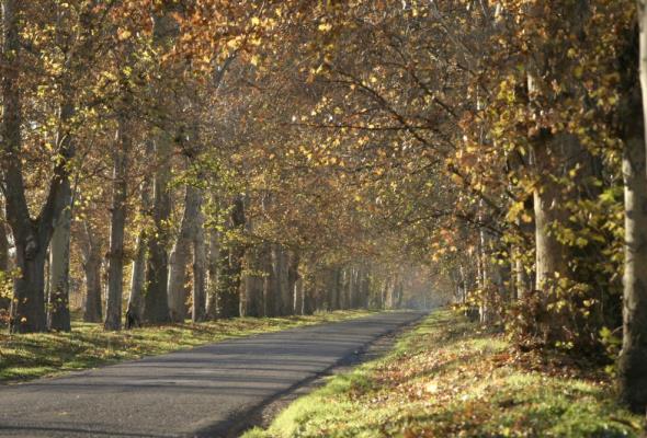 Kwieciński: Warmia i Mazury mogą liczyć na 300 milionów złotych na drogi lokalne