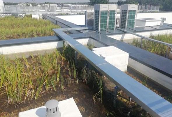 Budimex wykonał obiekt z dachem bagiennym. Pierwszy tak ekologiczny w Polsce
