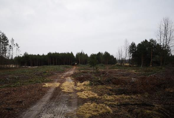 Ruszyła budowa S19 Nisko – Podgórze