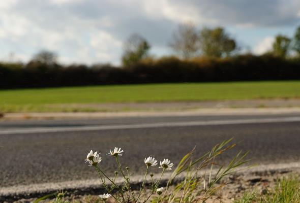 Skanska remontuje drogi krajowe w powiecie szczecineckim