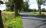 Wniosek do TK w sprawie wycinki drzew przy drogach