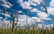 Polskie firmy inwestują w badania nad pozyskiwaniem zielonej energii. Trwają prace nad 280 projektami