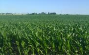 Esperotia buduje biogazownie w Świdwinie i Legnicy