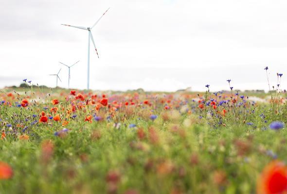 Vortex przejmuje 3 projekty wiatrowe