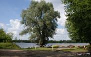 Przeprawa promowa w Solcu Kujawskim – ruszają konsultacje